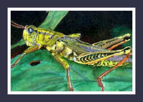 SOLD - GRASSHOPPER --  Acrylic on canvas